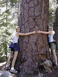 Accommodation Tahoe guests and Tree huggers Kate and Kayley from Canada enjoy nature at Lake Tahoe